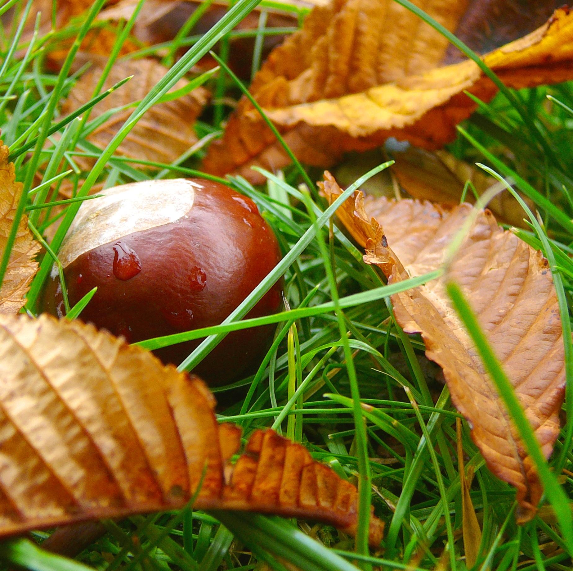 Gartentipps f r den oktober for Garten tipps