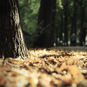 Herbstbild_Beitrag_Laub