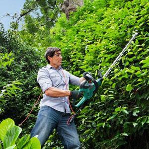 94122 Tipps & Tricks zum Baum- und Heckenschnitt