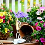 150x150_Frühling So bringt Ihr Euren Garten auf Vordermann