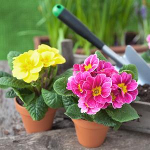 300x300_Frühjahr So bringt Ihr Euren Garten auf Vordermann