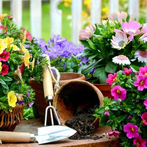 300x300_Frühling So bringt Ihr Euren Garten auf Vordermann