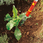 1016005507_51_150 Die richtige Pflege für Ihren Garten!