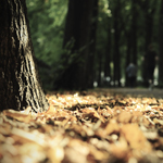 Herbstbild_Beitrag_Laub_kleiner
